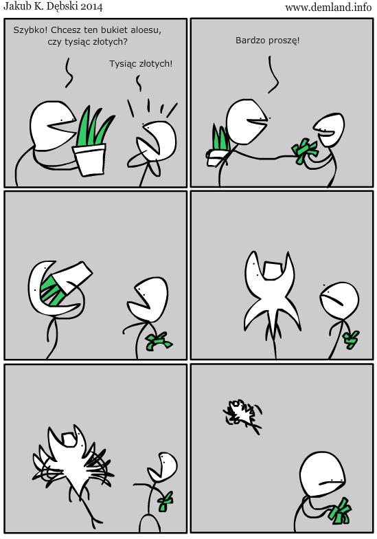 A za rogiem kwiaciarnia. Aloes w doniczkach po 30 złotych.